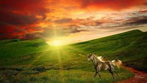Horse in Field at Sunrise Full HD Wallpaper and Background ...