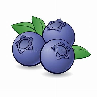 Clipart Berries Blueberry Cartoon Purple Vector Blueberries