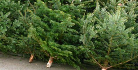 best 28 weihnachtsbaum entsorgen dresden