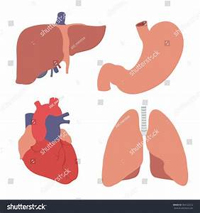 Human Organs  Heart  Liver  Stomach  Lungs  Vector