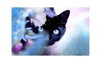 Untuk Backgrounds Komputer Terkeren Cantik Cats