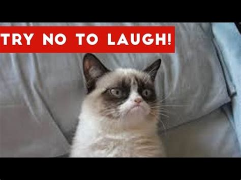 Best Funny Cats And Dogs Vines Compilation Try Not To