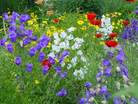 lila teppiche sommerblumen freude am garten