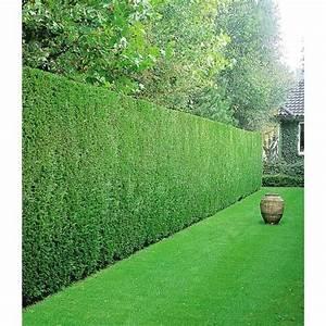 Sichtschutz Bäume Immergrün : leyland zypressen hecke 1 pflanze baldur garten gmbh haus garten leyland zypresse und ~ Eleganceandgraceweddings.com Haus und Dekorationen