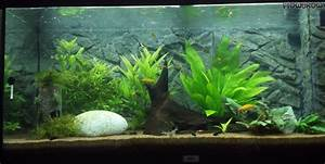 Co2 Rechner Aquarium : aqualand flowgrow aquascape aquarium database ~ Orissabook.com Haus und Dekorationen