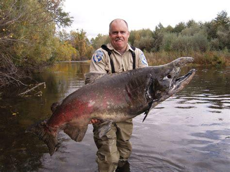 big fish hd animals big fish picture