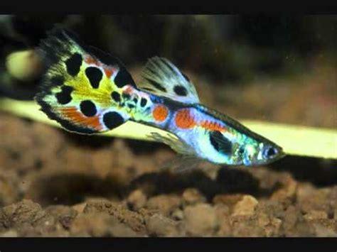 top  freshwater aquarium fish youtube