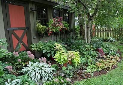 Shade Plants Gardens Garden Plant Landscaping Arboretum