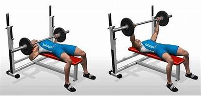 Bench Press Barbell Flat Workout Exercise Exercises