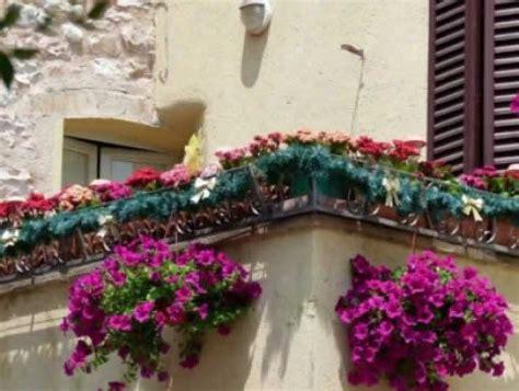 fiori da terrazzo fiori e piante per balconi e terrazzi a fiorilandia