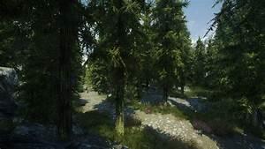 Skyrim, Pine, Forest, At, Skyrim, Nexus