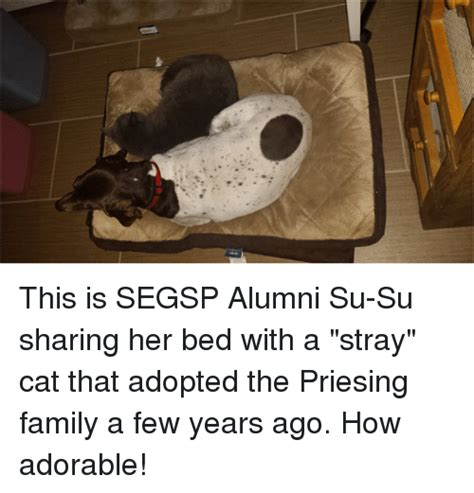 Sharing Bed Meme - this is segsp alumni su su sharing her bed with a stray cat that adopted the priesing family a