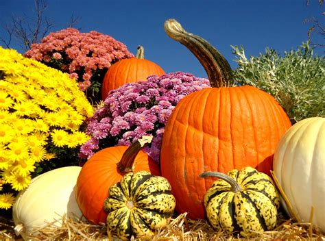 pumpkins and fall pictures let the tide pull your dreams ashore enjoying fall