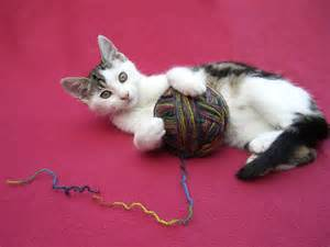 cats play cat animal wildlife