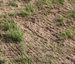 Wie Oft Rasen Lüften by Rasen Vertikutieren Warum Wann Wie Oft Plantura