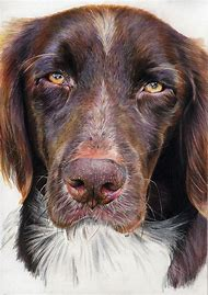 Dog Portraits Colored Pencil Drawings