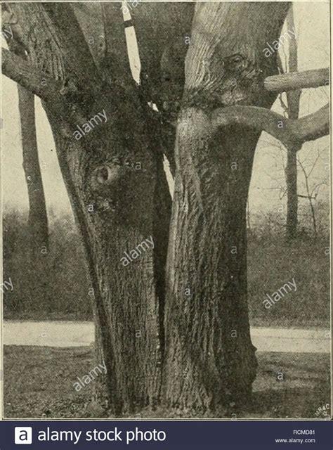 grenzabstand bäume nrw abwechselungsreich stock photos abwechselungsreich stock images alamy
