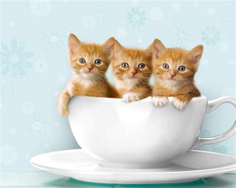 Funny Hd Cat Wallpaper, Funny Cat Wallpaper, Hd Cat
