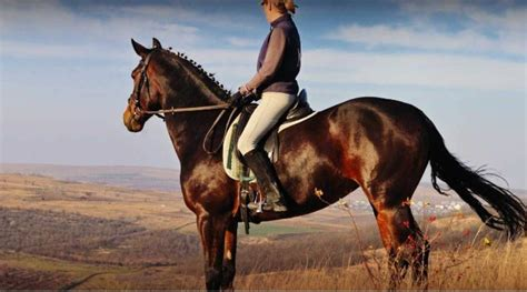 horse muscles work muscular riding horses exact skeletal compare around lot