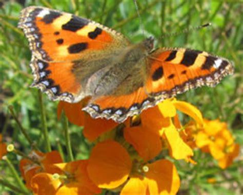 tout savoir sur les papillons le magazine gamm vert