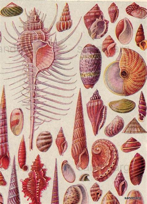 worms in kitchen cabinets les 1192 meilleures images du tableau cabinet de curiosit 233 1659