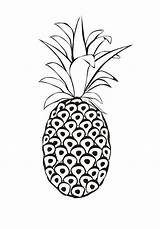 Pineapple Coloring Spanish Venezuela Pages Printable Clip Getcoloringpages sketch template