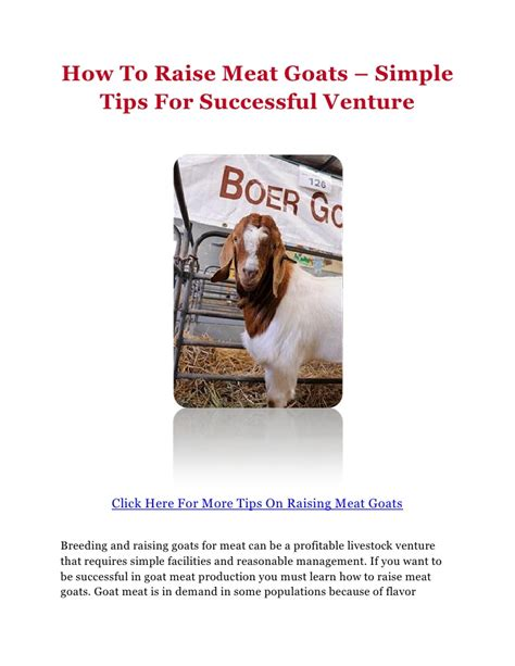 how to raise goats how to raise meat goats simple tips for successful venture