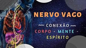 Nervo Vago Conex U00e3o Corpo  Mente E Esp U00edrito