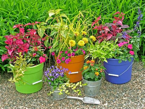 Container Gardening : Pails And Buckets Plastic Metal Or Wooden Buckets Are