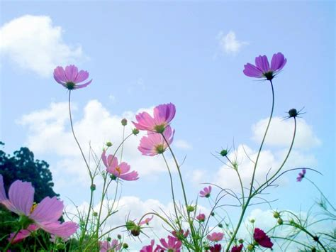 beautiful flowers  sky background