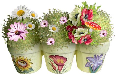 pot transparent pour orchidee gifs et fleurs marguerites page 3