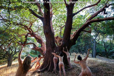 mama madrone treespirit project