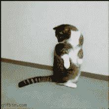 cat tricks cat e