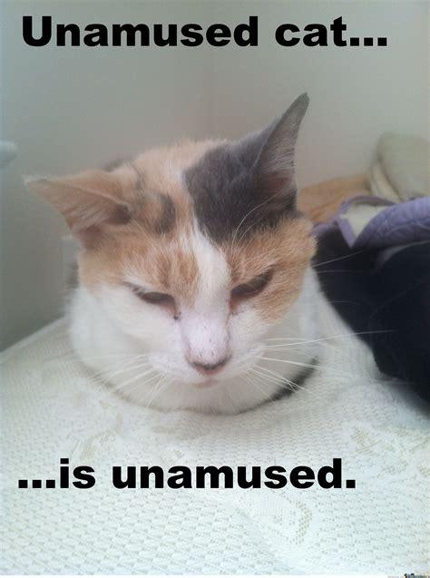 Unamused Cat Meme - unamused cat by catman37185 meme center