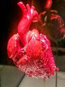 Lungs And Heart  U2013 Dani U0026 39 S Decadent Deals