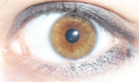 brown eye colors brown eye colour