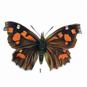 Free Vintage Clip Art - Orange Butterflies for Halloween