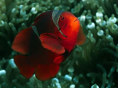 Fish Wallpapers Colorful Underwater Sea Background Animals