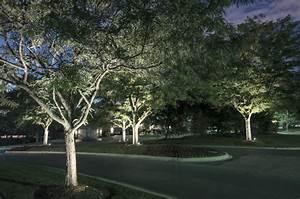 Tree lighting outdoor lighting in chicago il outdoor for Outdoor accent lighting for trees