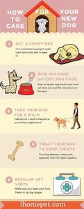 Infographic  How To Care For Your New Dog  The Easy Way
