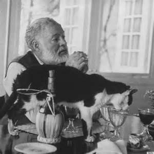 hemingway cats ernest hemingway s cats didn t get in the way of his