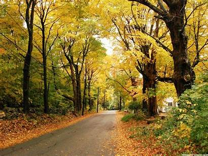 Autumn Background Leaves Backgrounds Wallpapers Fall Trees