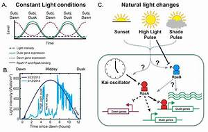 Natural Changes In Light Interact With Circadian