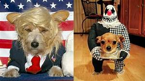 the best costumes for dogs