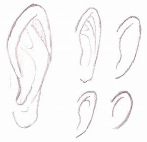 Human Ear Drawing Front