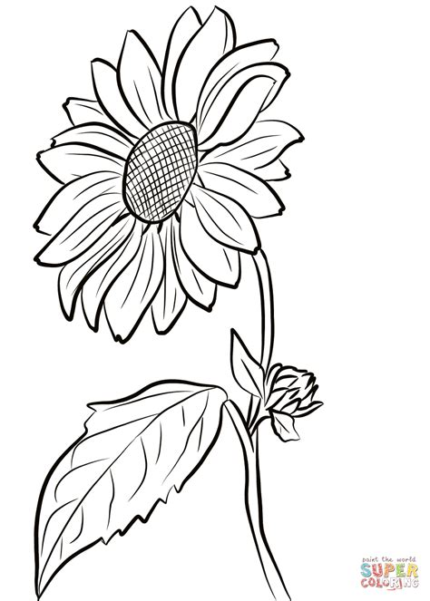 sunflower coloring page  printable coloring pages