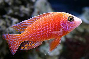Top 50 Beautiful Fish Photos Colorful Image HQ Wallpapers