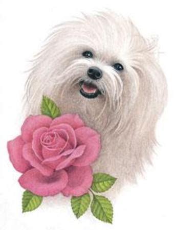animaux chien blanc et