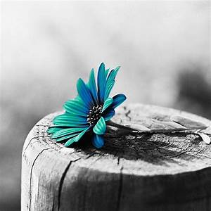 Flower #black & #white #colorsplash photography | Black ...