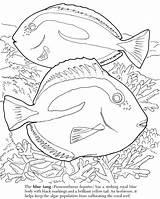 Coloring Fish Algae Barrier Ocean Realistic Reef Getcolorings Tropical Getdrawings Creation Printable Colorings sketch template